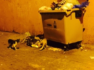 Dumpster with stray cats